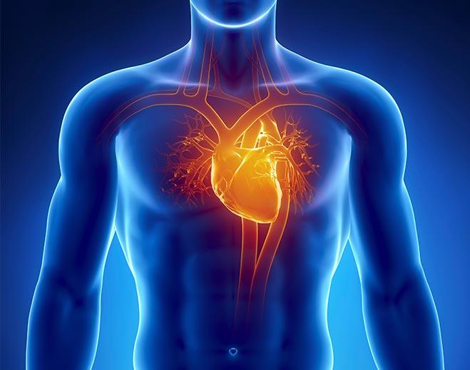 Cardiology-Human-Body-Heart-Chest-Pain